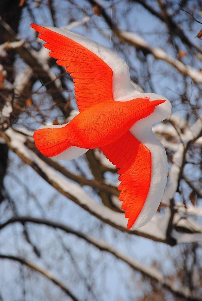 1 Vogel im Schnee