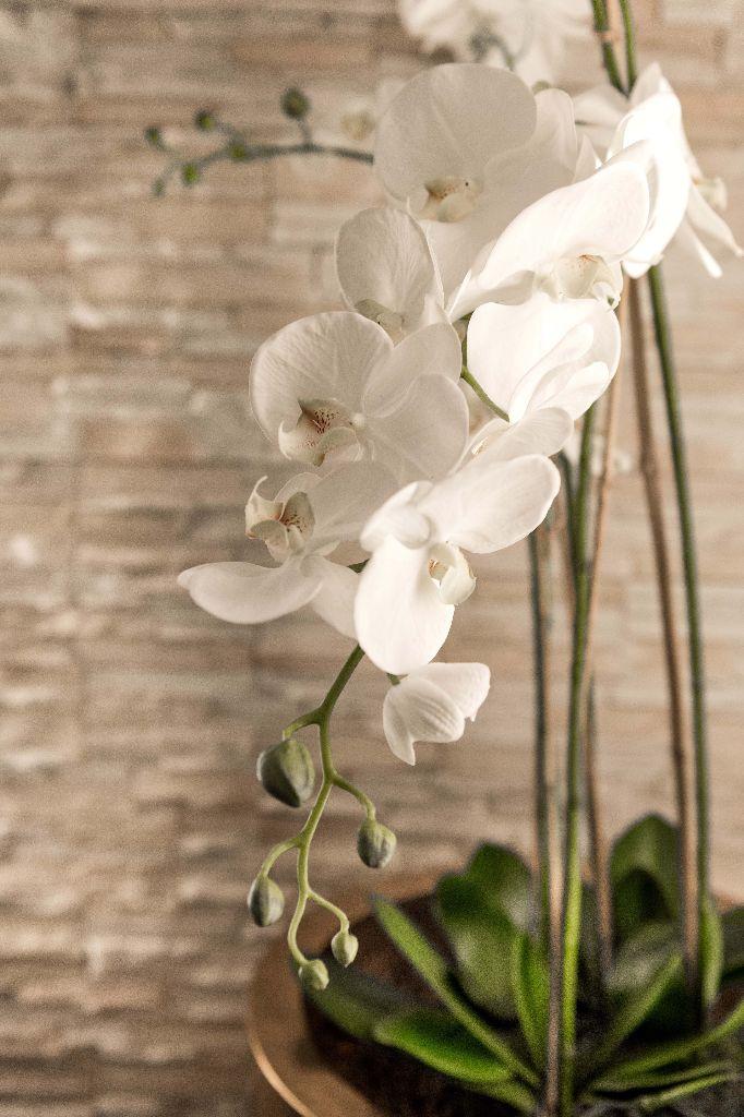 Orchidee + Naturstein